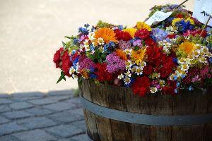 beautiful flowers in a planter on the sidewalk