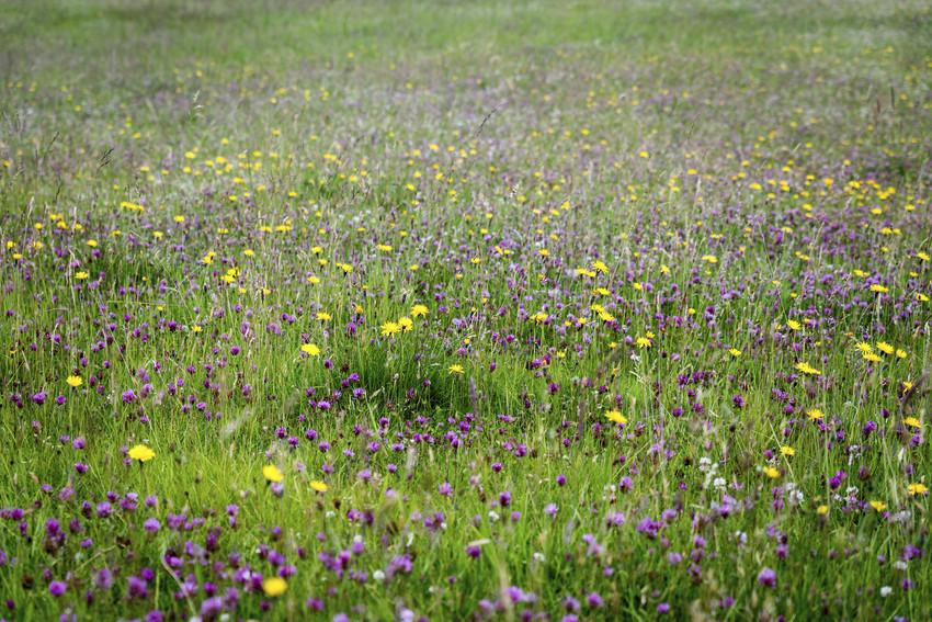 flowers in a field in montvale nj